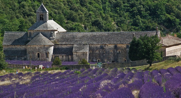 FRANCE: The war against lavender and ISIS